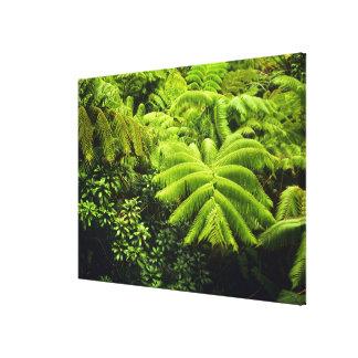 Hawaii, Big Island, Lush tropical greenery in 2 Canvas Print