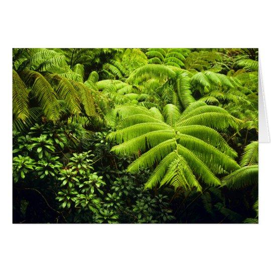 Hawaii, Big Island, Lush tropical greenery in 2 Card