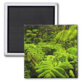 Hawaii, Big Island, Lush tropical greenery in 2 Inch Square Magnet