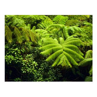 Hawaii, Big Island, Lush tropical greenery in 2 Postcard