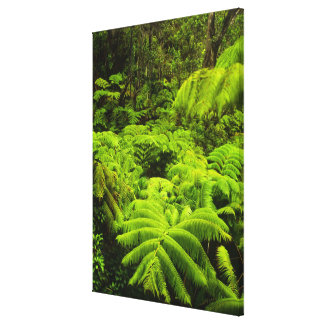 Hawaii, Big Island, Lush tropical greenery in Canvas Print