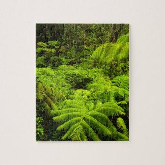 Hawaii, Big Island, Lush tropical greenery in Jigsaw Puzzle