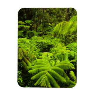 Hawaii, Big Island, Lush tropical greenery in Magnet