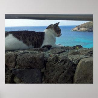 Hawaii Cat Poster