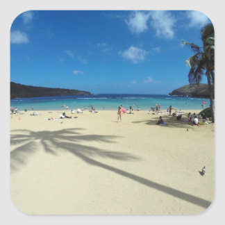 Hawaii Coconut Tree Square Sticker