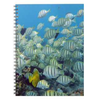 Hawaii Convict Tangs Fish Spiral Notebook