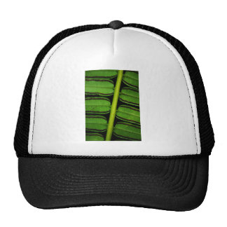 Hawaii Fern Trucker Hat