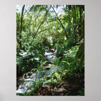 Hawaii Forest Stream Print