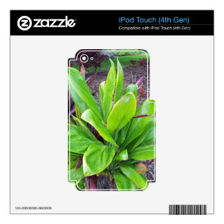 Hawaii Good Luck Plant Skin For iPod Touch 4G