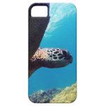 Hawaii Green Sea Turtle iPhone 5 Cases