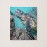 "Hawaii Green Sea Turtle Jigsaw Puzzle<br><div class=""desc"">There are many Green Sea Turtles in Hawaii. Hanauma Bay Oahu Hawaii is a popular place for snorkeling and seeing Green Sea Turtles. Turtles are called Honu in Hawaiian language.</div>"