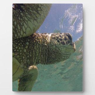 Hawaii Green Sea Turtle Photo Plaques