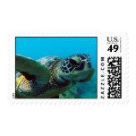 Hawaii Green Sea Turtle Postage Stamp