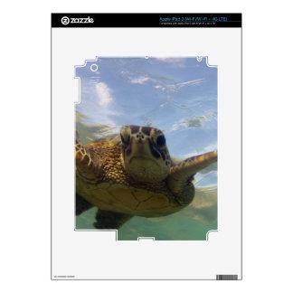 Hawaii Green Sea Turtle iPad 3 Skins