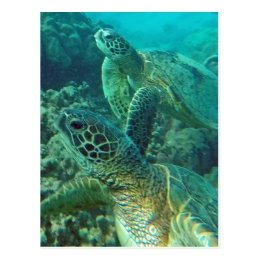 Hawaii Green Sea Turtles Postcard