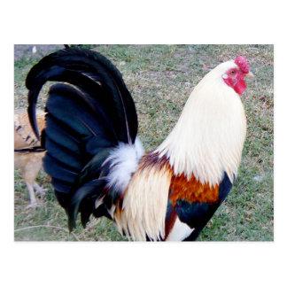 Hawaii Hanauma Bay Rooster Postcard