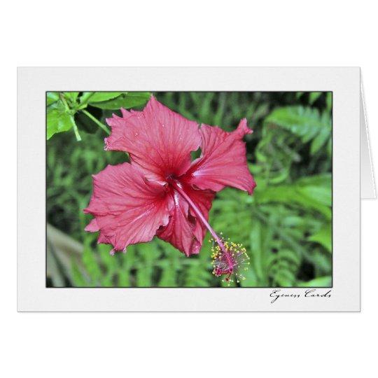 Hawai'i Hibiscus Card