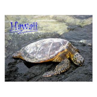 Hawaii - Honu Postcard