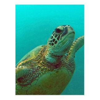 Hawaii Honu Postcard