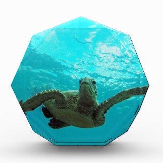 Hawaii Honu Turtle Acrylic Award