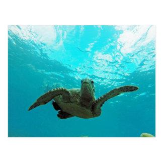 Hawaii Honu Turtle Postcard