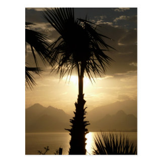 Hawaii Island Travel Beach Sunset Palm Trees Postcard