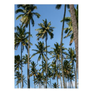 Beach Themed Hawaii Island Travel Exotic Beach Palm Trees Postcard