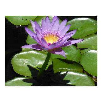 Hawaii Lotus Flower Postcard
