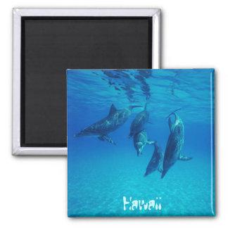 Hawaii Magnet