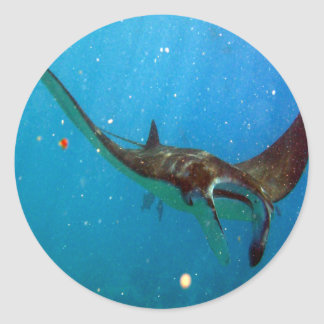 Hawaii Manta Ray Classic Round Sticker