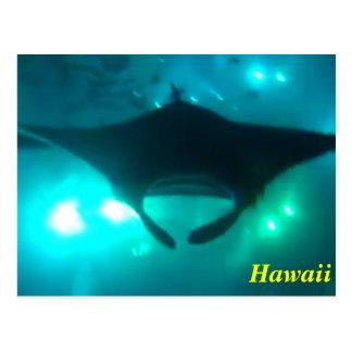 Hawaii Manta Ray Post Card