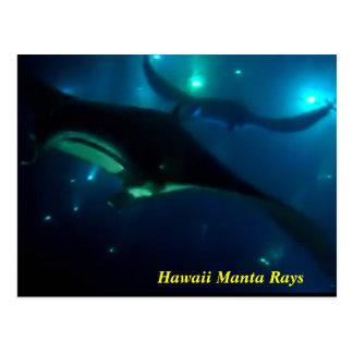 Hawaii Manta Rays Postcard