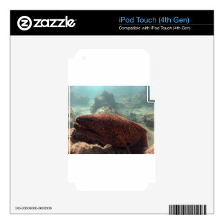 Hawaii Moray Eel Decal For iPod Touch 4G