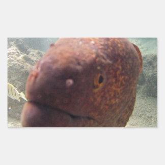 Hawaii Moray Eel Rectangular Sticker