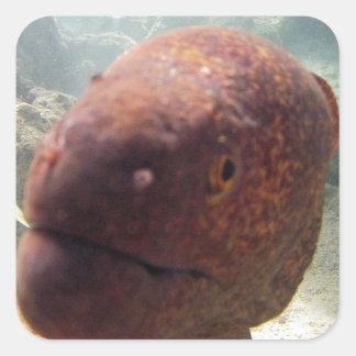 Hawaii Moray Eel Square Sticker