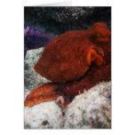 Hawaii Octopus Greeting Card