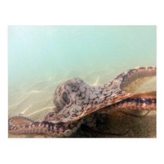 Hawaii Octopus Postcard