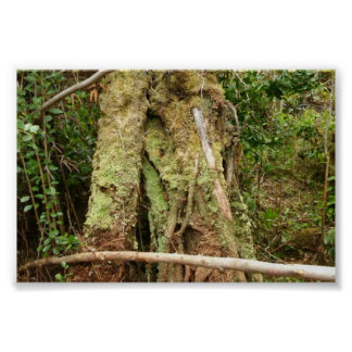 HAWAII OHIA WITH BENT GUAVA TREE POSTER