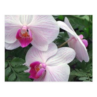 Hawaii-orchids Postcard