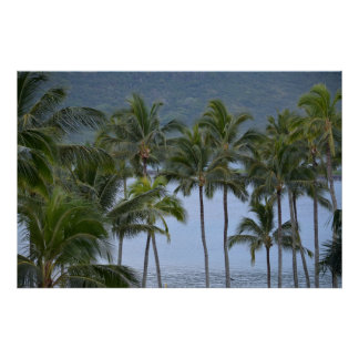 Hawaii Palm Trees Print