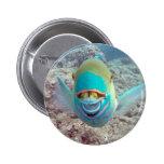 Hawaii Parrot Fish Button