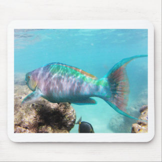 Hawaii Parrot Fish Mouse Pad