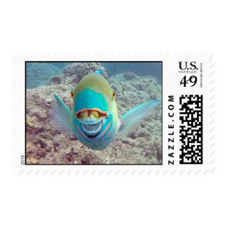 Hawaii Parrot Fish Postage