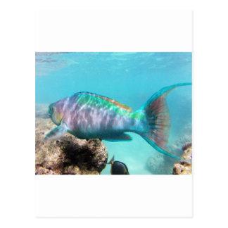 Hawaii Parrot Fish Post Cards