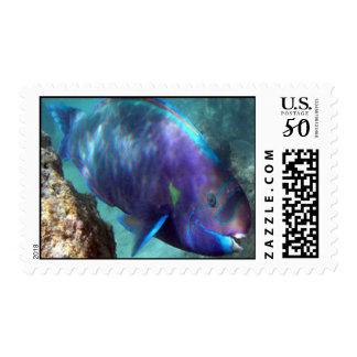 Hawaii Parrot Fish (Uhu) Postage