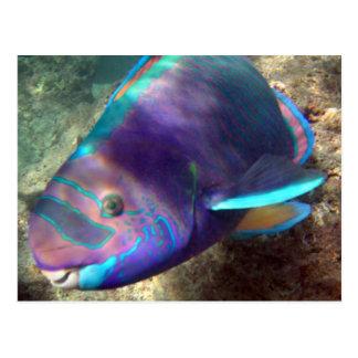 Hawaii Parrot Fish - Uhu Postcard