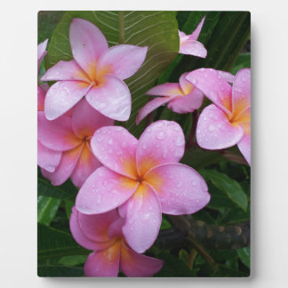 Hawaii Pink Plumeria Flowers Plaque