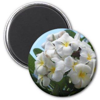 Hawaii Plumeria Flower magnet