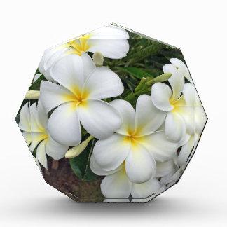Hawaii Plumeria Flowers Award