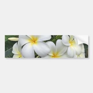 Hawaii Plumeria Flowers Bumper Sticker